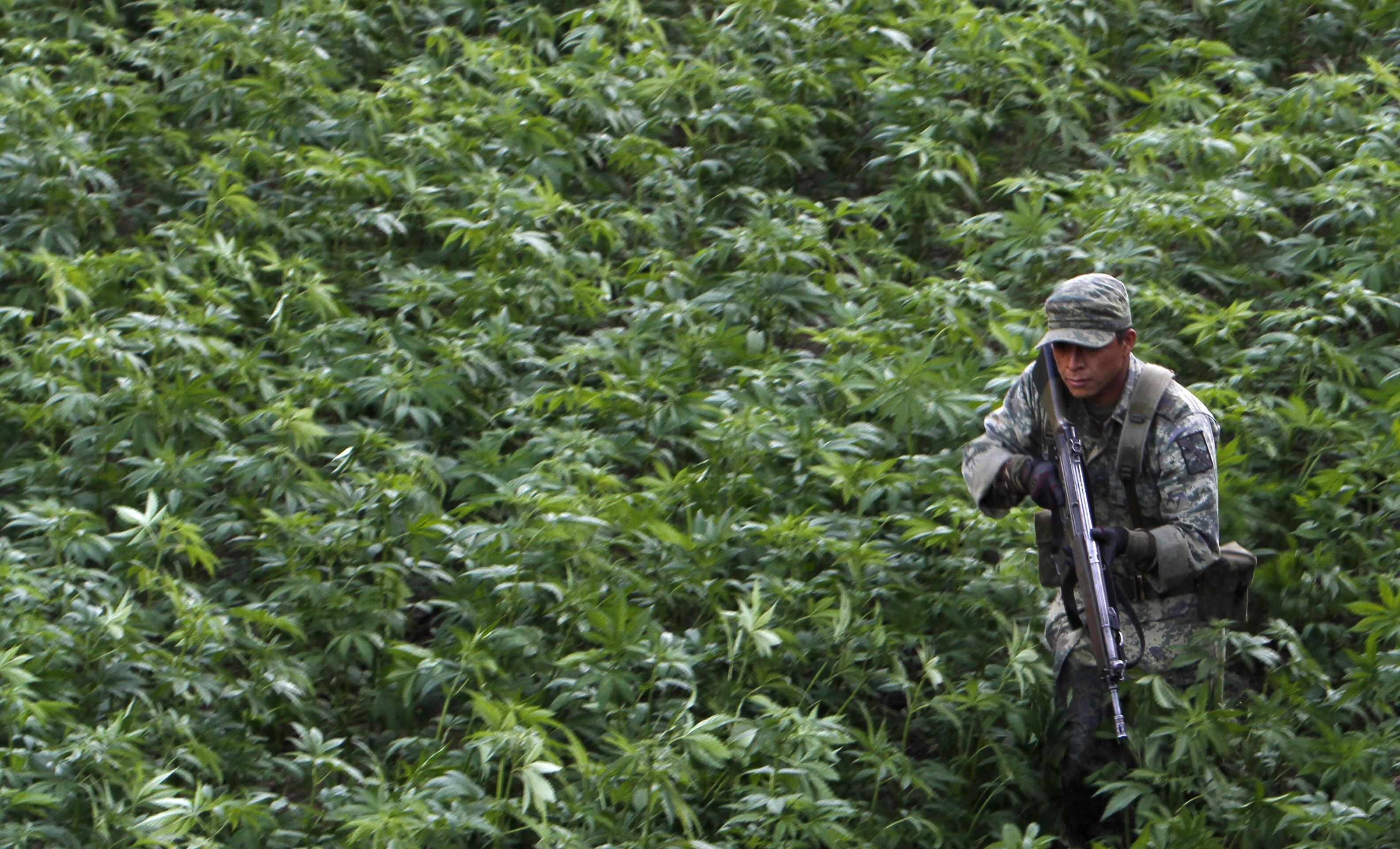 49d6b95cd6fa Testigo da detalles nunca antes contados de cuando  El Chapo  estuvo  escondido en la sierra