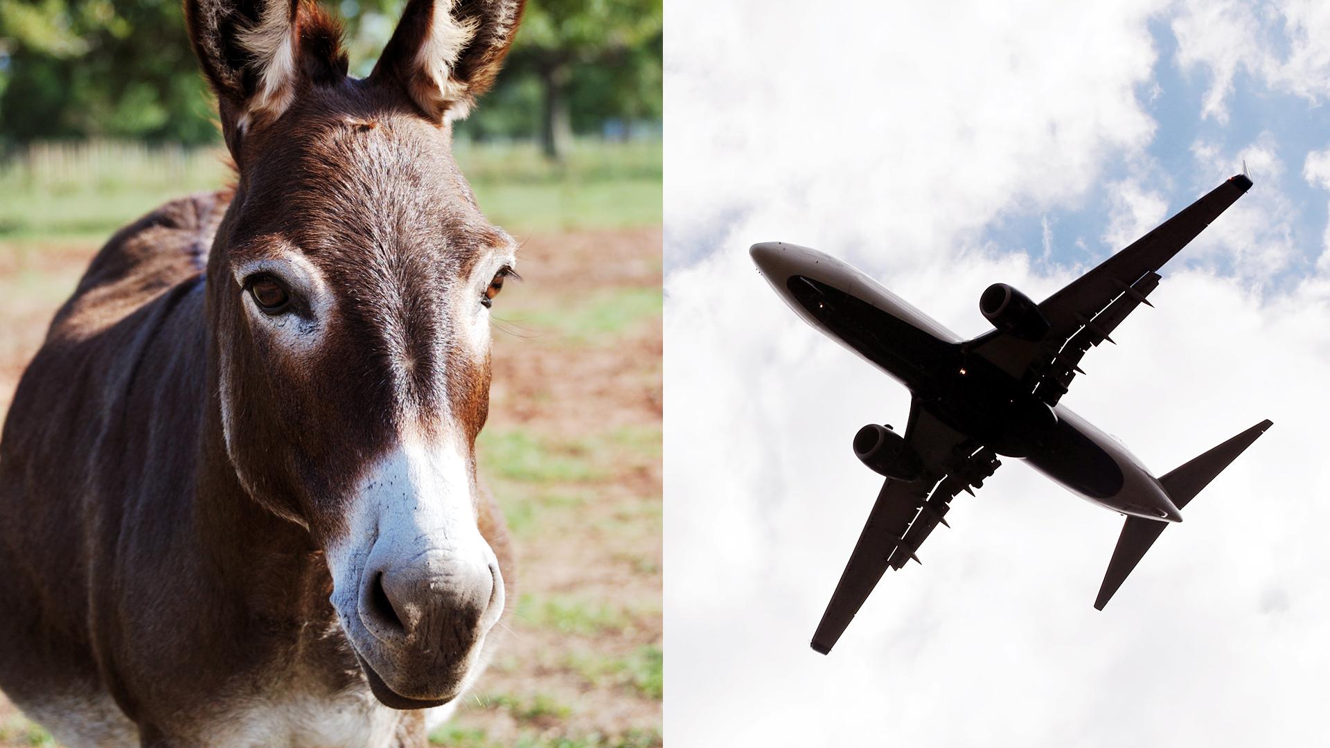 Resultado de imagen para avion y burro