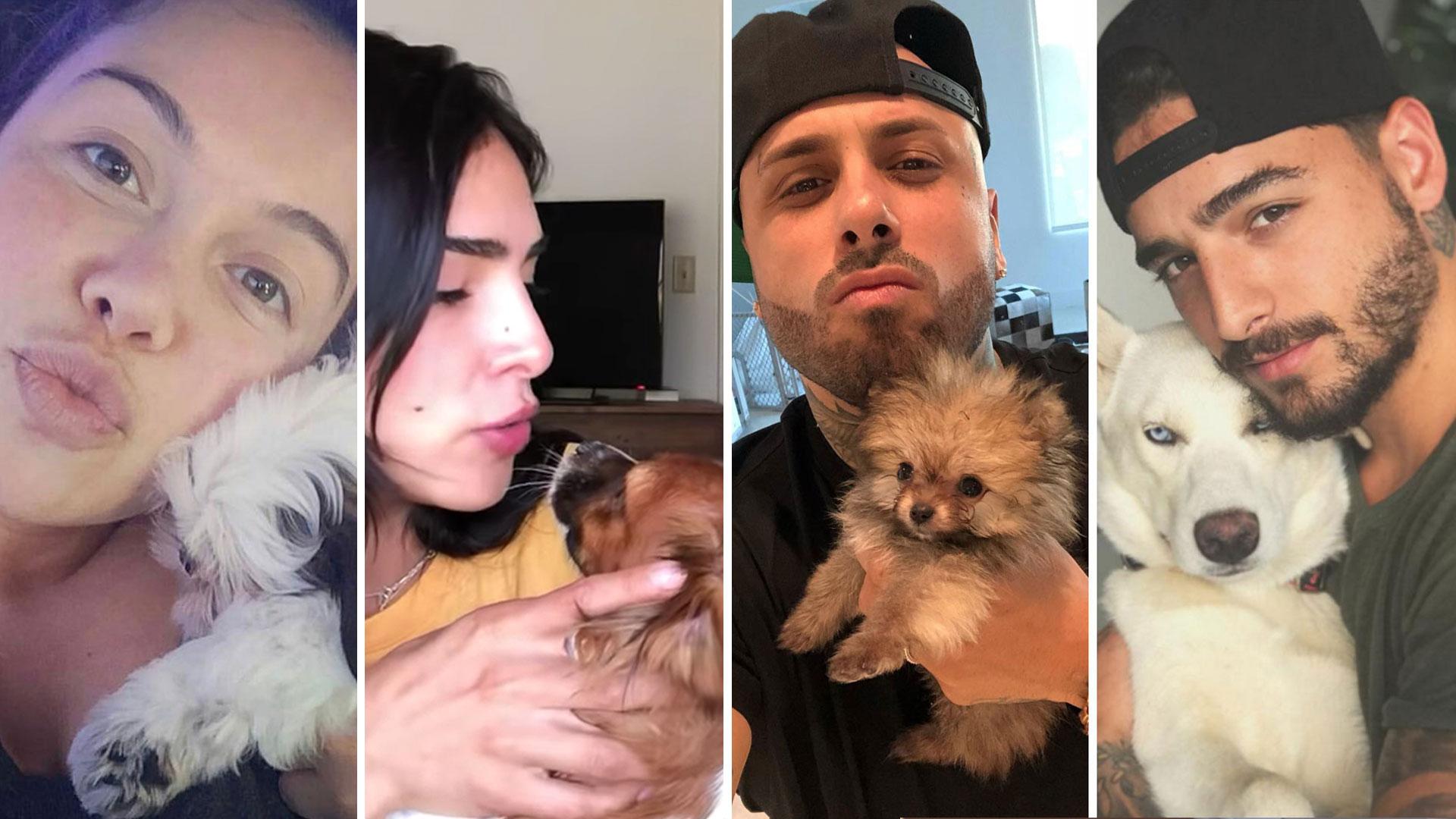 25 famosos que encontraron el amor en un compañero de 4 patas