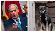 Gobernador de Texas veta proyecto que protegería a los perros de estar encadenados