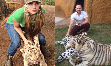 Los verdaderos tigres del regional mexicano no vienen del norte: mira las mascotas de los artistas