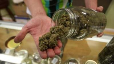 Licencias de cannabis medicinal serán otorgadas por internet