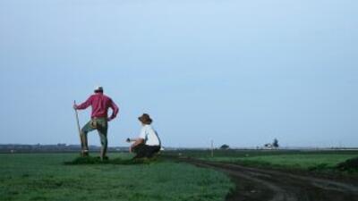 El cierre del gobierno puso en peligro las cosechas de California y Arizona