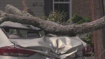 La tormenta tropical Isaías provocó cinco tornados en zonas de Pensilvania y Nueva Jersey