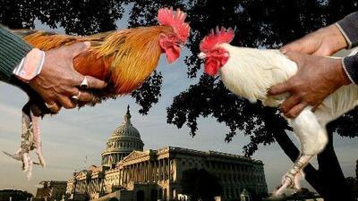 """""""Jennifer González no logró detenerlo"""": todo indica a la prohibición federal de peleas de gallos"""