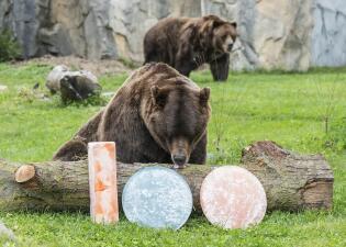 Animales en el zoológico Brookfield celebran la centésima temporada de su equipo favorito de fútbol de Chicago