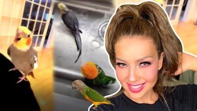 Thalía y su dueto más singular: mira cómo sus mascotas cantan con ella (y la forma en que los baña)