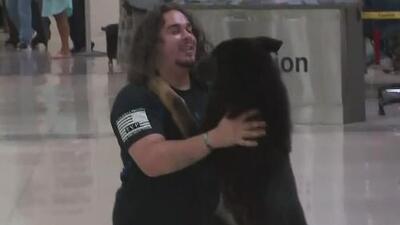 La emoción de este perrito de servicio al reencontrarse con el sargento que lo adoptará te sacará una sonrisa