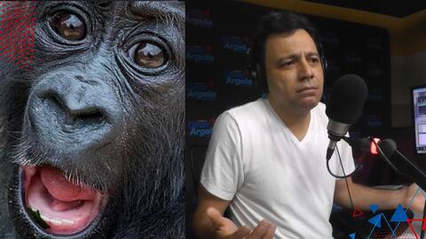 Científicos implantan genes a monos para hacerlos más inteligentes