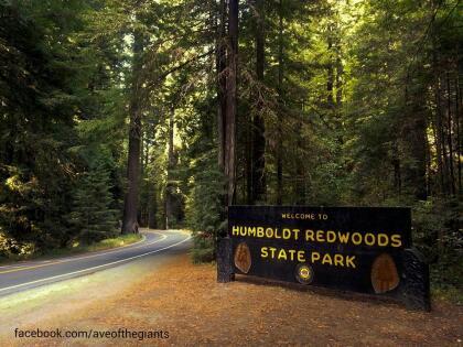 """<b><a href=""""http://avenueofthegiants.net/"""" target=""""_blank"""">La denomina Avenida de los Gigantes</a> corresponde a la ruta estatal 254, en el condado de Humboldt, al norte de California. Famosa por sus 31 millas de árboles enormes que llegan a medir hasta 370 pies de altura. </b>El recorrido lo puedes hacer sin necesidad de bajarte de tu auto, pero sí deseas parar,  <a href=""""http://avenueofthegiants.net/view-map/"""" target=""""_blank"""">este mapa </a>es una muy buena guía para decidir dónde."""