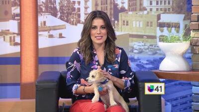 Despierta San Antonio te invita a adoptar una mascota