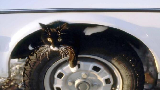 "Joven causa aparatoso accidente vehicular al evitar atropellar a un ""gatito"" que se le cruzó en el camino"
