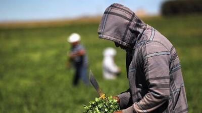 Cómo evitar caer enfermo por el cilantro contaminado de Puebla