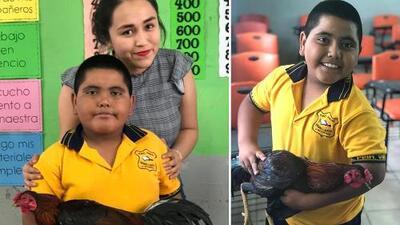 Niño le da un gallo a su maestra porque no tenía dinero para darle otro regalo de cumpleaños