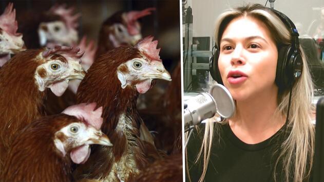 """""""Solo pensó comprar dos"""":  Hombre adquirió 1,000 gallinas por menos de un dólar por error en una subasta"""