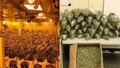 Ya es legal la marihuana en California, pero las autoridades siguen tras los negocios sin permiso