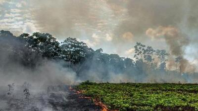 Latin artists share concern for Amazon fire in Brazil
