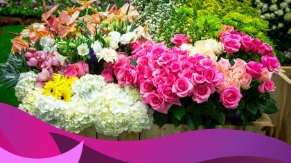 15 Flores Que Te Traerán Buena Suerte Horóscopos Univision