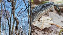 Advierten sobre la presencia de serpientes en los parques de Pensilvania y piden tener precaución