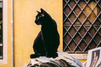 ¿Crees que los gatos negros son de mala suerte? Internet te demuestra por qué estás equivocado
