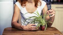 Plantas de interior: Las mejores y más fáciles de cuidar para decorar tu hogar