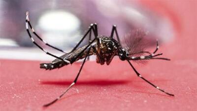Encuentran criaderos de mosquitos con virus del Nilo en partes de NYC