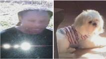 """""""Que nos lo regrese, por favor"""": piden ayuda para identificar a una sospechosa de robar un perro en Dallas"""