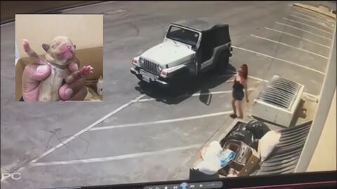 La policía busca a una mujer por arrojar a siete perritos recién nacidos en un basurero en California