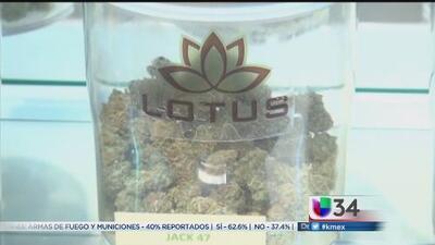 Histórica legalización de la marihuana en California