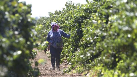 Dos mexicanas trabajadoras del campo denuncian abuso sexual de sus patronos en California