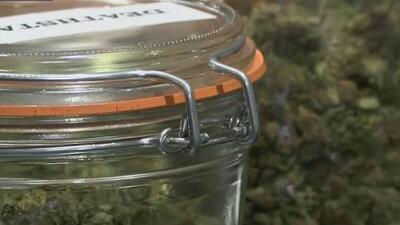 Marihuana medicinal, apetecida por los ladrones a residencias en Logan Square