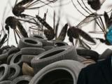 Muere una mujer por dengue en Puerto Rico y Pierluisi alerta por desechos de neumáticos que son nidos de mosquitos