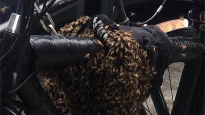 Hallan un enjambre masivo de abejas en una bicicleta estacionada en una calle de Nueva York