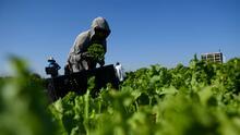 ¿Eres trabajador agrícola y has sufrido las consecuencias de los campos envenenados? Conoce las leyes que te protegen