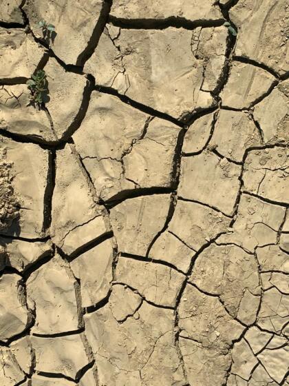 El distrito de agua de Fresno inició el corte del agua después de acordarlo en una junta el pasado mes de junio, lo cual esta  <b>agravando la situación de muchos agricultores en el Valle Central.</b> La falta del vital líquido esta provocando que  <b>dejen de sembrar algunos productos</b> como lo son: el melón y el esparrago.  <br>