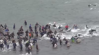 Cacería anual de ballenas piloto en Dinarmarca revivió pugna entre las tradiciones y la conservación