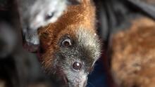 Advierten riesgo por aparición de murciélagos muertos debido a la ola de calor