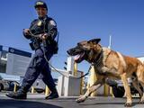 """Legislador de Utah dice """"quédese en casa"""" a quien no quiera que lo muerda un perro policía"""