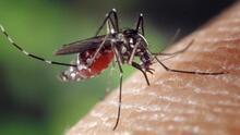 Así es como puedes detectar y prevenir una infección por el virus del Nilo Occidental
