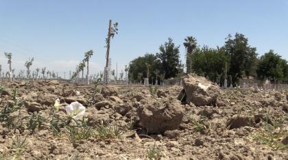 """La sequía también esta afectado el futuro de empresas. """"Si este año no nos llueve,  <b>probablemente mi compañía y otras compañías tendrán que cerrar</b>"""", dijo María Gloria Del Bosque de la compañía Del Bosque Farms.  <br>"""