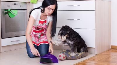 Consejos para mantener tu casa limpia si tienes mascotas