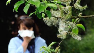 Cómo protegerte de las alergias y la gripe en esta temporada en el centro de Texas