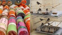 Confiscan 29 pájaros pinzones escondidos en rulos de pelo en el aeropuerto JFK