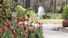 10 jardines para disfrutar de la primavera en Carolina del Norte