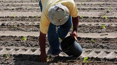 El Salvador gestiona visas de trabajo temporales con EEUU y miles de campesinos se beneficiarían