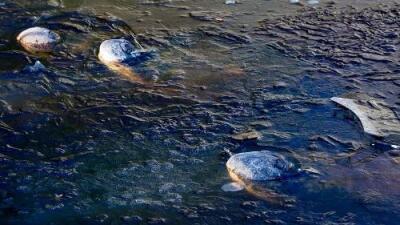 El extraño comportamiento de 18 caimanes que les permitió sobrevivir en aguas congeladas