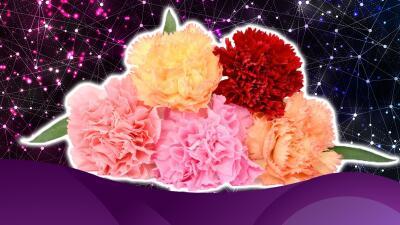 El clavel, flor mágica y esotérica