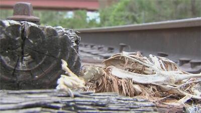 Ante aparición de restos de animales en Florida, muchos se preguntan si son rituales de santería o casos de abuso