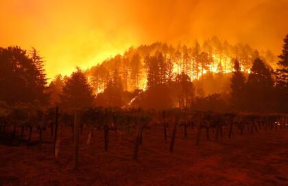 Las llamas del incendio Glass han arrasado con colinas enteras y muchas de las cosechas de uvas en la región no sobrevivieron a las llamas. En la imagen, el fuego arde cerca de un viñedo en Santa Helena.