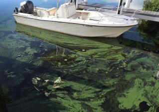 El alga verdosa que cubre este lago de Florida es tóxica y podría enfermar a la población